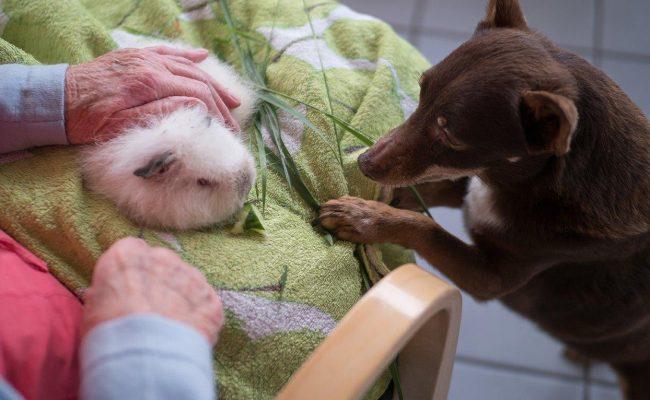 Hans Rehn Stift Theapie mit Tieren